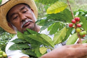 Alles nachhaltig oder was? - Auf Spurensuche von Tomate, Palmöl & Co.