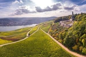 Alles Riesling oder was? - Vinotheken-Tour zu den Rheingauer Weingütern Crass, Schloss Schönborn & Freimuth