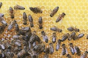 Bienen machen Honig -  Besuch bei einer Bio-Imkerei am LiLu Frankfurt