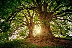 Unser Wald heute & morgen - Geführte Wanderung durch ein grünes Wunder