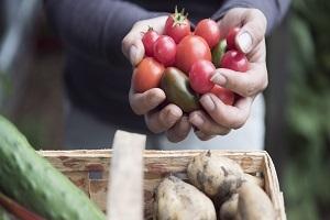 Gemüsegärtnern - Eigenes Biogemüse auf kleiner Fläche anbauen