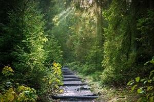 Eintauchen in die Natur - Waldbaden-Wanderung im Taunus