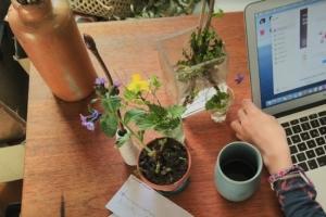 Die Blumenwerkstatt für Familien - Unsere Online- & Outdoor-Tour für große & kleine Stadtnatur-Entdecker